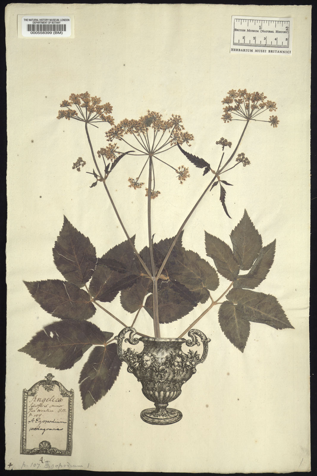 https://www.nhm.ac.uk//resources/research-curation/projects/clifford-herbarium/lgimages/BM000558399.JPG