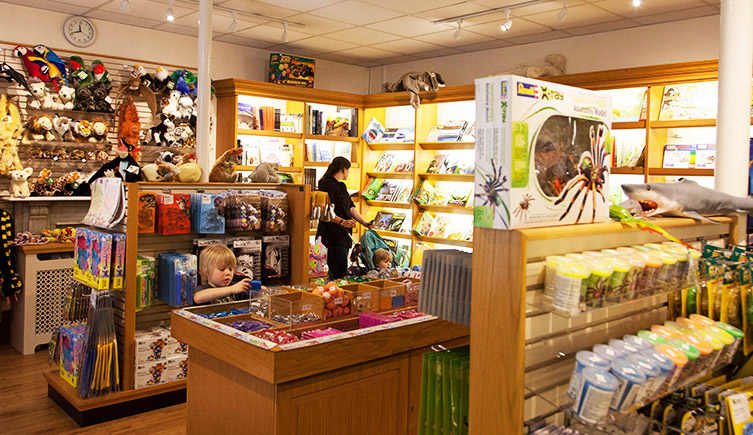 A visitor browsing in the Museum shop