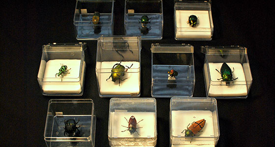 tring-loan-boxes-12-beetles