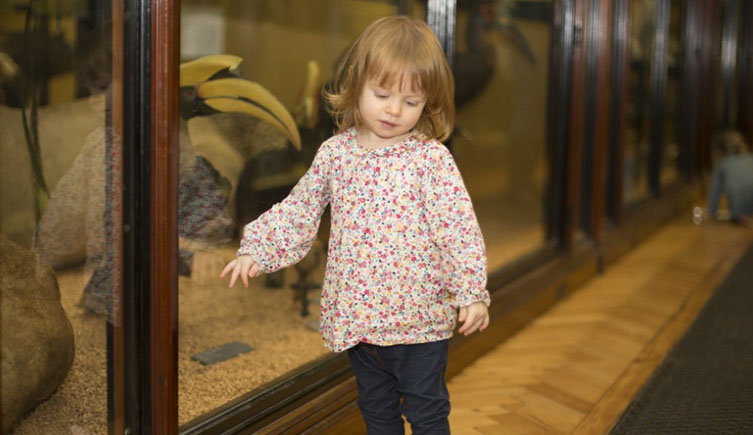 A child explores the galleries at Tring