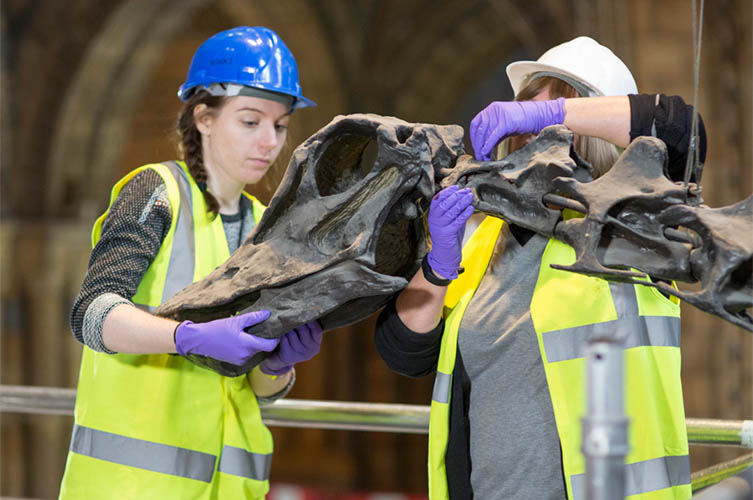 Dippy being deinstalled from Hintze Hall
