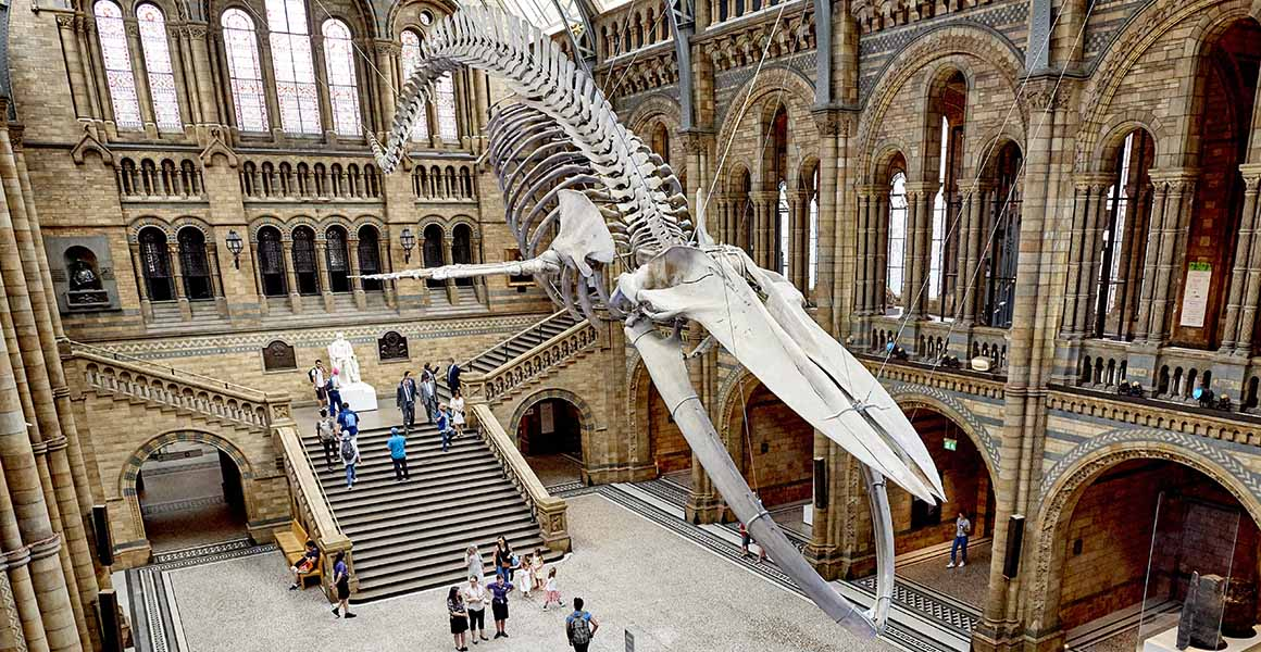 The blue whale in Hintze Hall