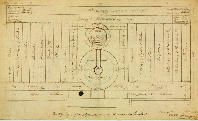 Sketch of a plan for the Natural History Museum by Richard Owen
