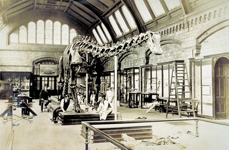 Dippy on display in the early 1900s