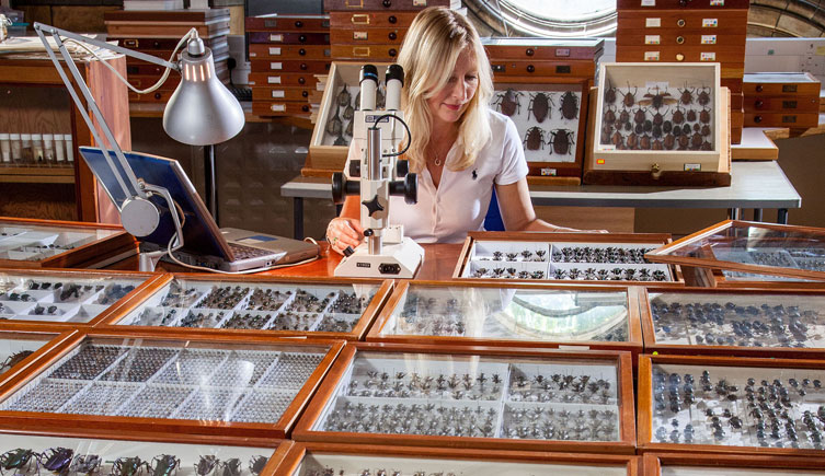 Beulah Garner with the beetle collection (Coleoptera)