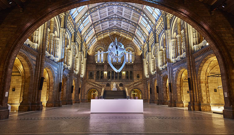 Artist's impression of the blue whale in Hintze Hall - Copyright Casson Mann 2015