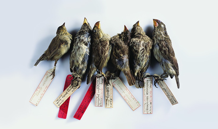 finches-two-column