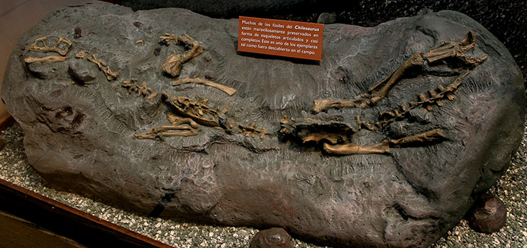 Cast of Chilesaurus
