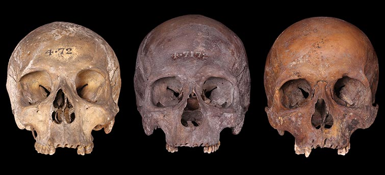 Three skulls from the river Thames