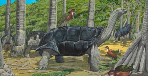 A painting of a giant tortoise by Dr Julian Hume