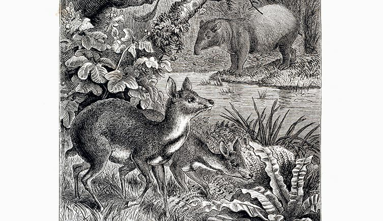 wallace-borneo-mammals-two-column