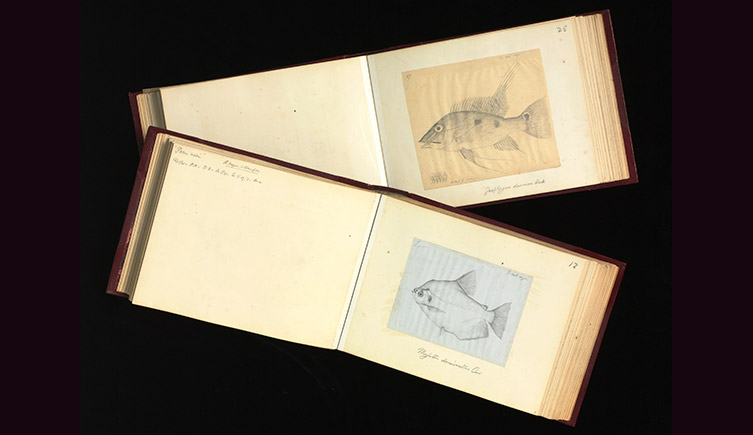 Two black and white drawings of fish, bound into books