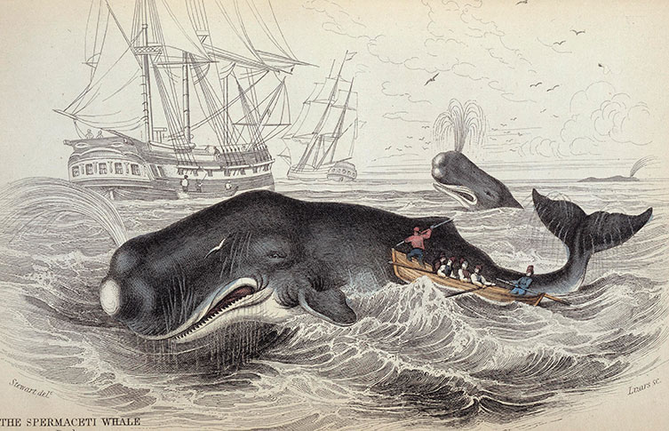 An illustration of a sperm whale hunt