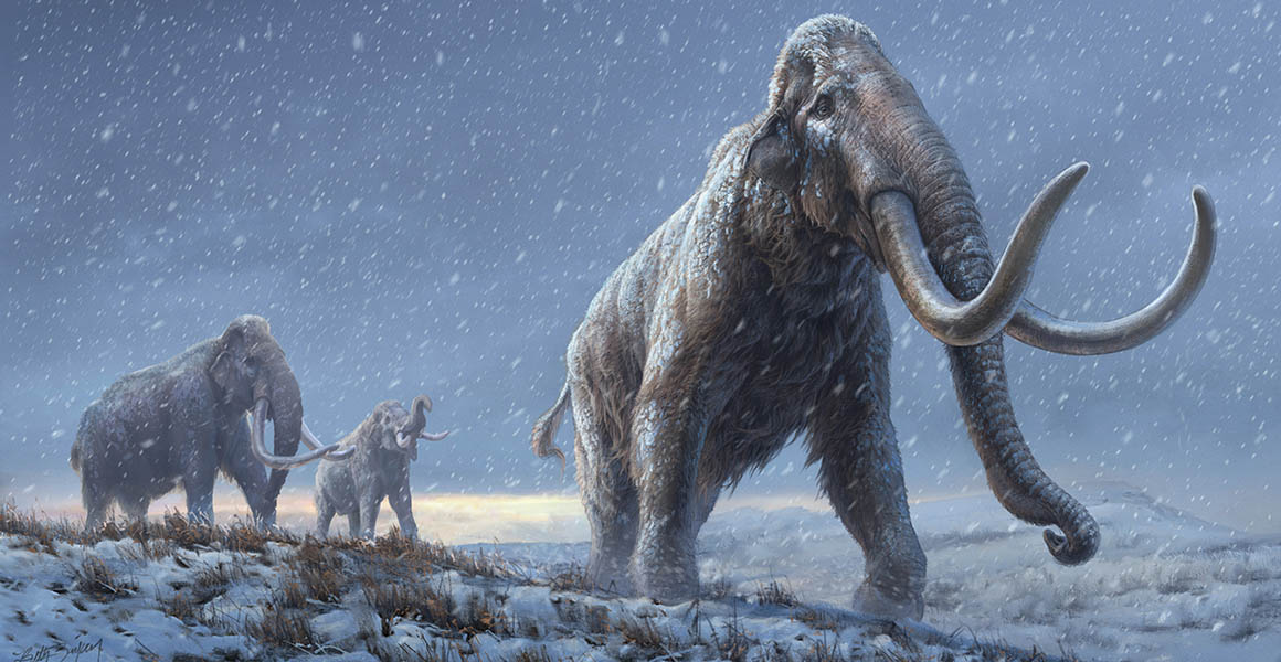 Oldest-ever DNA extracted from a million-year-old mammoth tooth