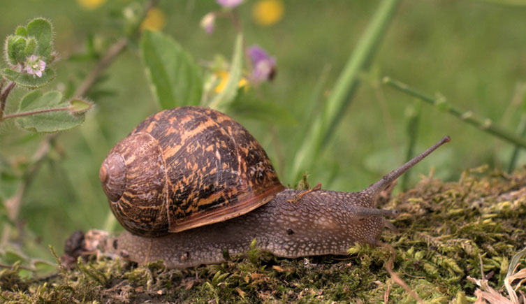 How a human sees a garden snail crawling across a mossy surface