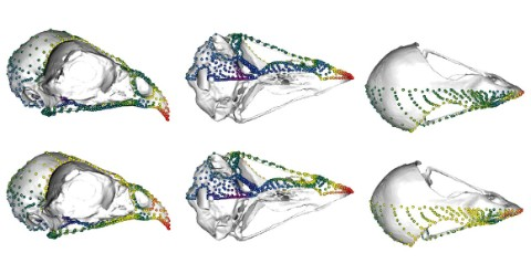 Six images of bird skulls with coloured dots showing data points.
