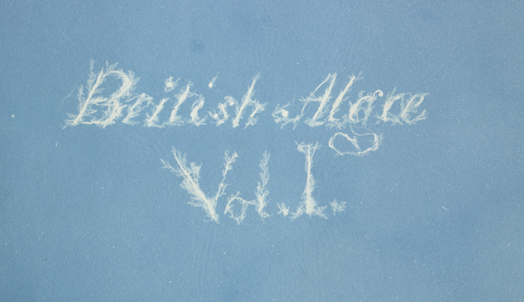 The text pages and captions were photographic facsimiles of Anna's handwriting. In some cases, lettering appears to be formed by delicate strands of seaweed.