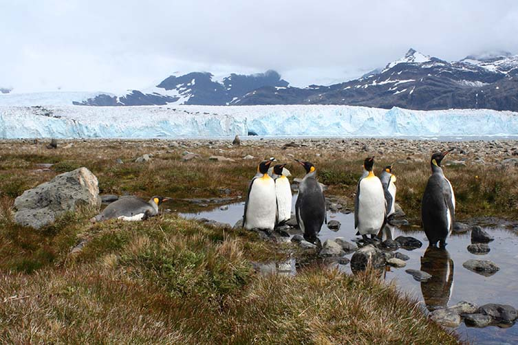 A group of penguins next to a glacier