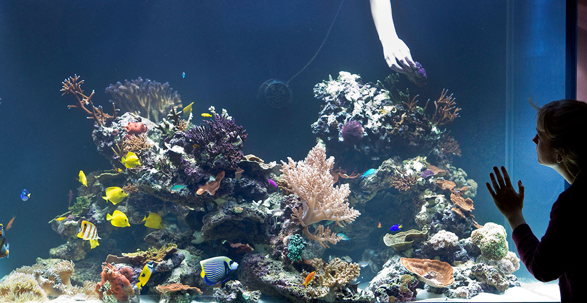 Aquarium in the Coral Reefs: Secret Cities of the Sea exhibition