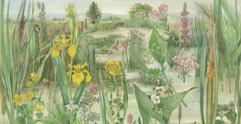 Wetland habitat illustration by Barbara Nicholson
