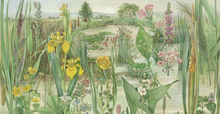 Nature on our doorstep: the art of British natural history | Natural