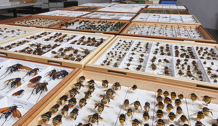 There are over 20,000 species of bees