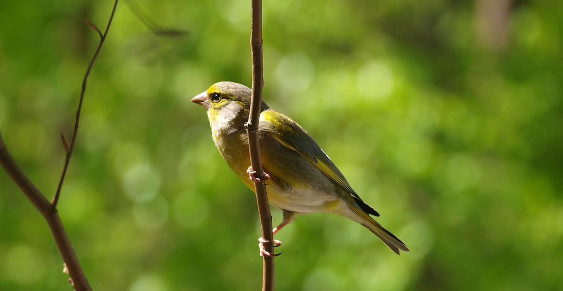 How listening to bird song can transform our mental health | Natural  History Museum