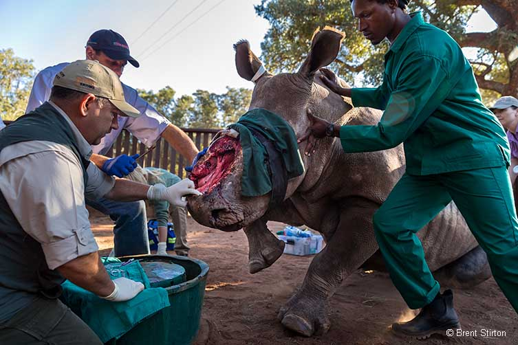 Saving Hope © Brent Stirton
