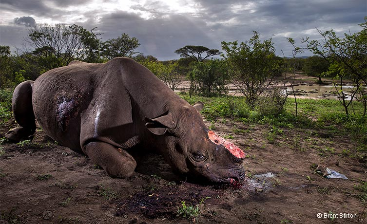 Memorial to a species © Brent Stirton