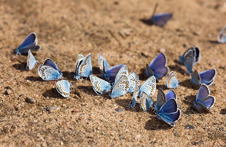Butterflies gathering in a group