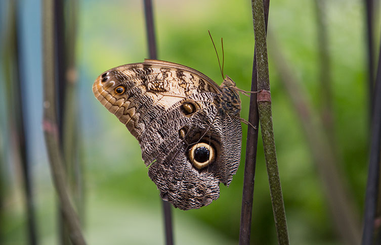 Why do some butterflies and moths have eyespots? | Natural History