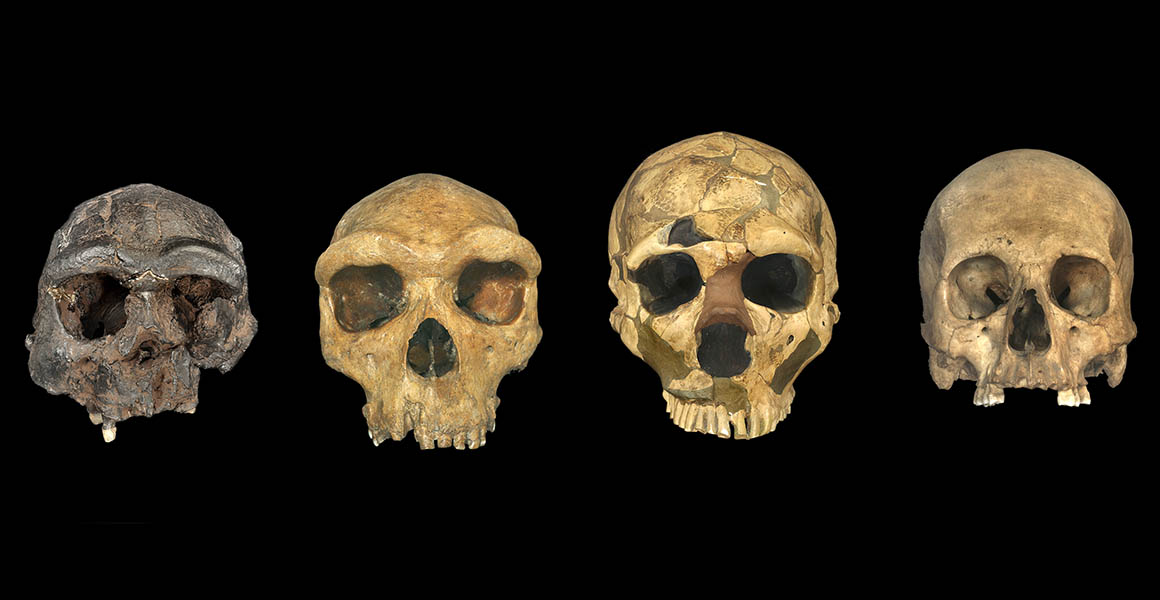 Modern human origins cannot be traced back to a single point in time