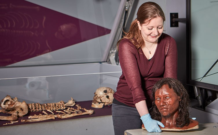 A Museum preparator lifts the Cheddar Man head model, with the skeleton in the background