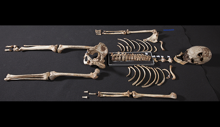 cheddar-man-reassembled-skeleton-two-column
