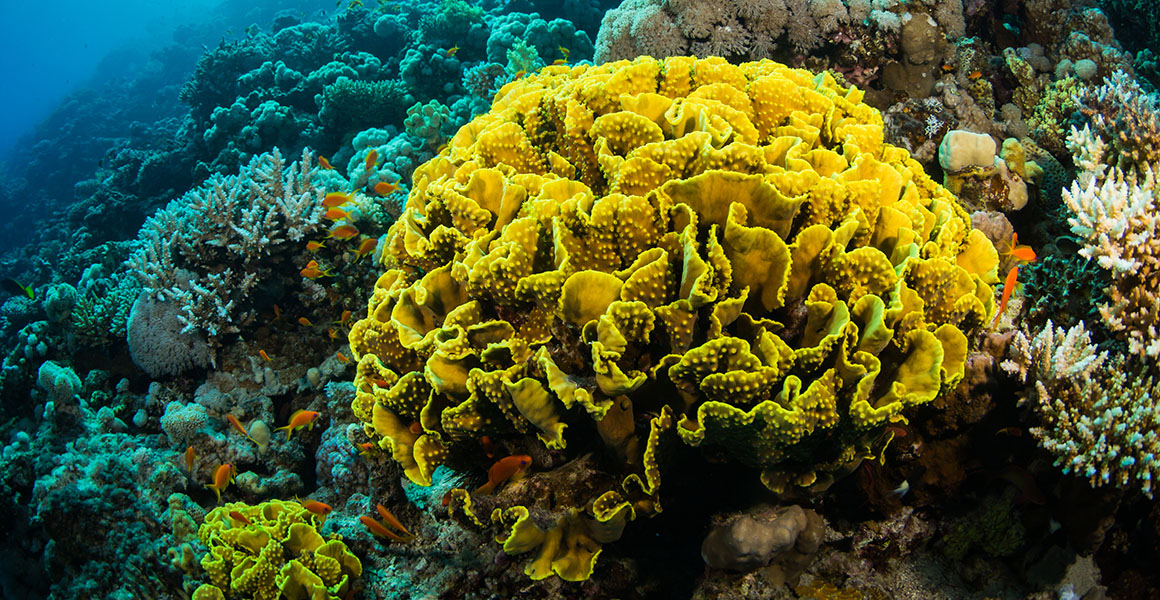 extinction risks for coral reefs essay 5 species we stand to lose if coral reefs are as these might face extinction without their coral we stand to lose if coral reefs are destroyed and.