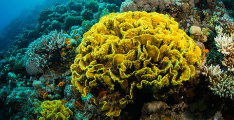 As part of a living reef, the Turbinaria specimen was once home to an abundance of sea life © Sergemi/Shutterstock.com