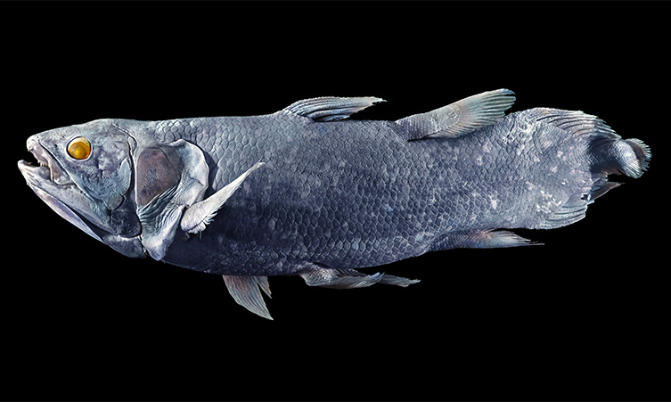 coelacanth-Latimeria-chalumnae-two-column