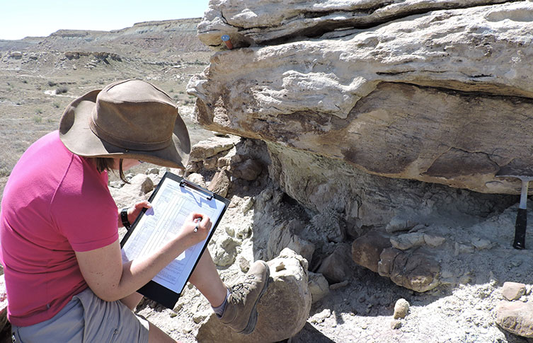 Dr Maidment working on the Morrison Formation