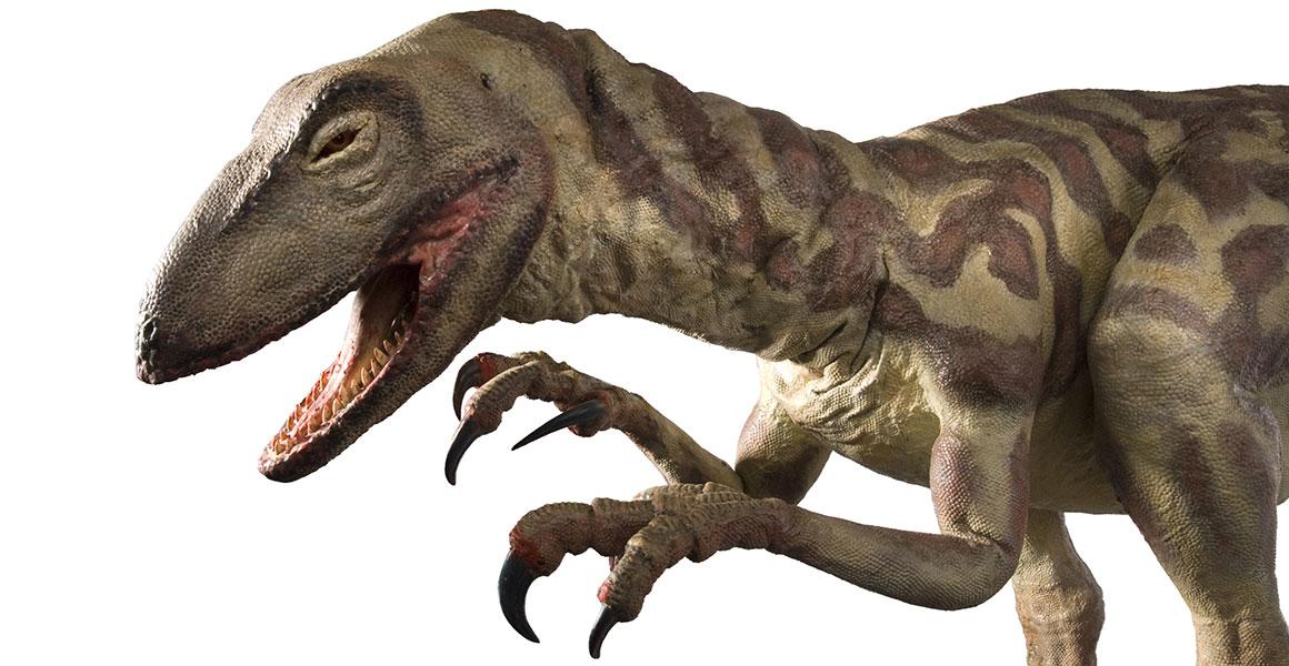 Debunking Dinosaur Myths And Movie Misconceptions Natural History