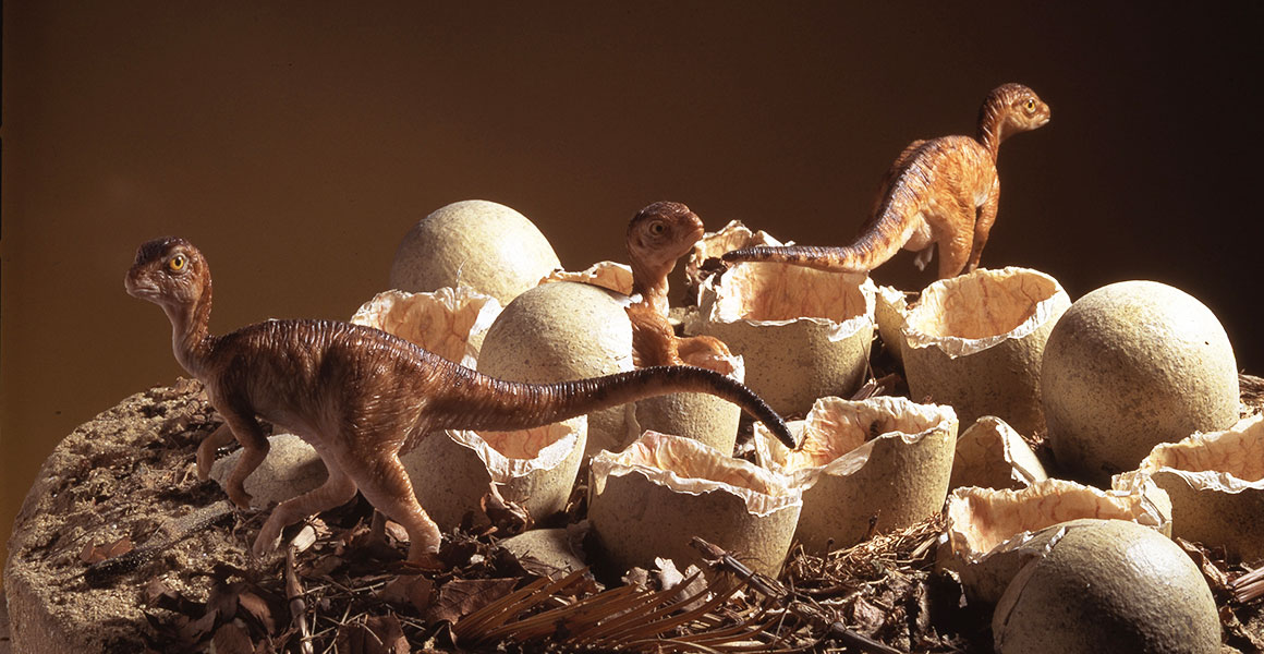 A model of Orodromeus hatchlings and eggs in a nest