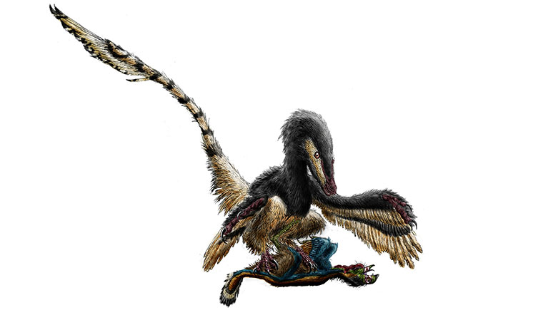 Velociraptor perched on prey