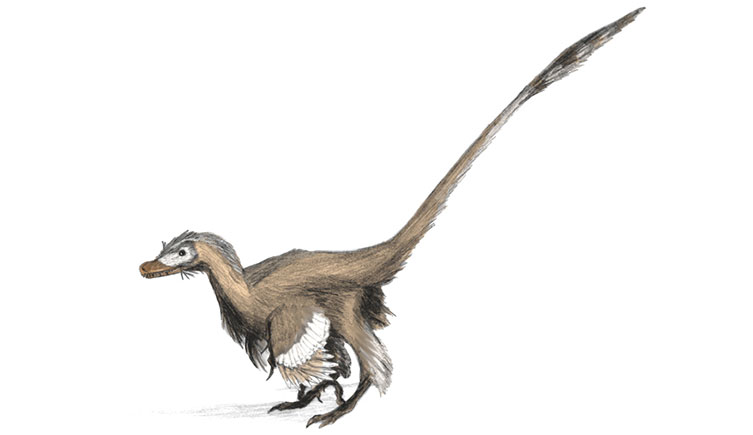 Palaeoart reconstruction of Velociraptor