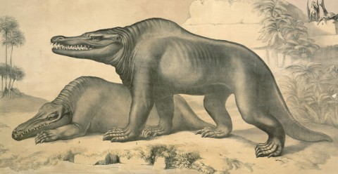 An early illustrated reconstruction of Megalosaurus