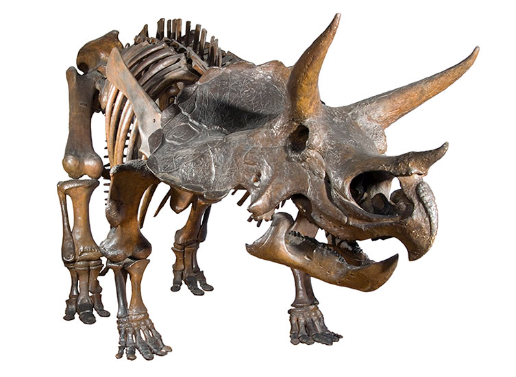 Beyond Jurassic World: what we really know about dinosaurs