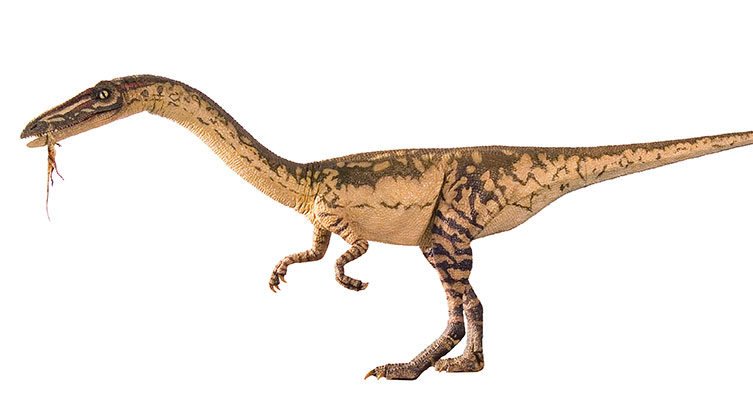 A model of Coelophysis