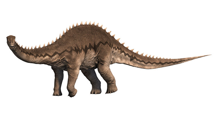Diplodocus reconstruction