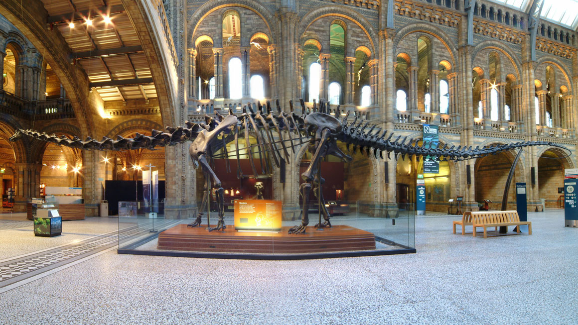 Dippy the Diplodocus in Hintze Hall