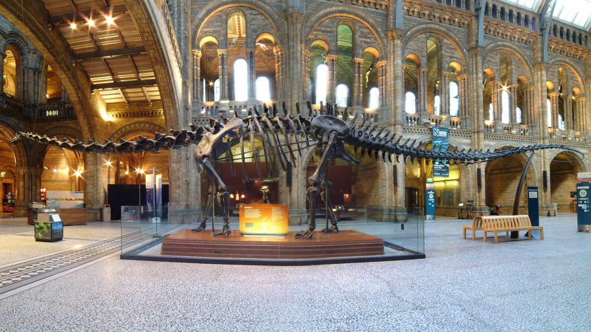 Dippy: this is your life | Natural History Museum