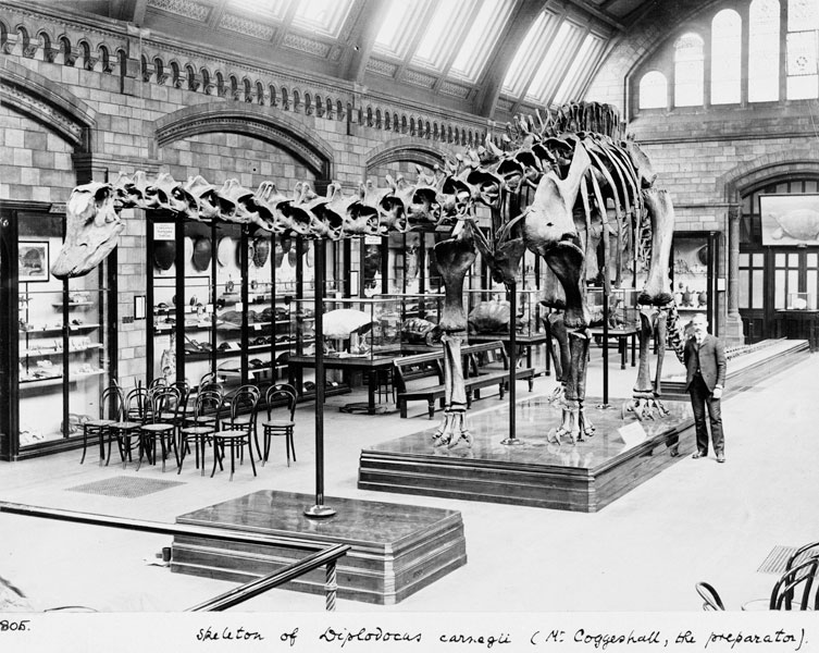 The Diplodocus in the Museum's Fossil Reptile Gallery (now Creepy Crawlies)