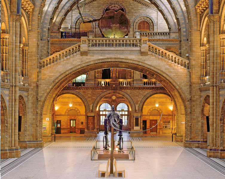 The Diplodocus as it is today, in the Museum's Hintze Hall